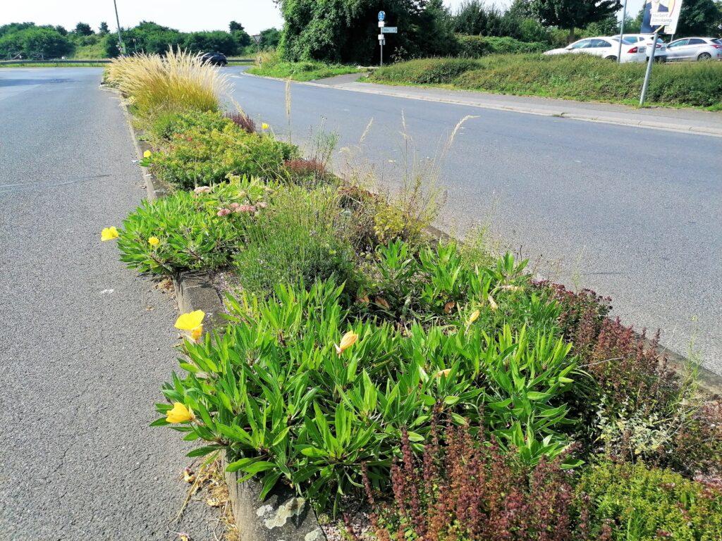 Sattes Grün und zarte Blüten auf dem Pflanzstreifen zum Wallauer Gewerbegebiet.