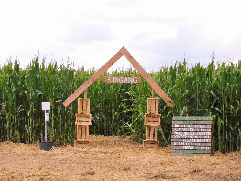 Eingang zum Wallauer Maislabyrinth